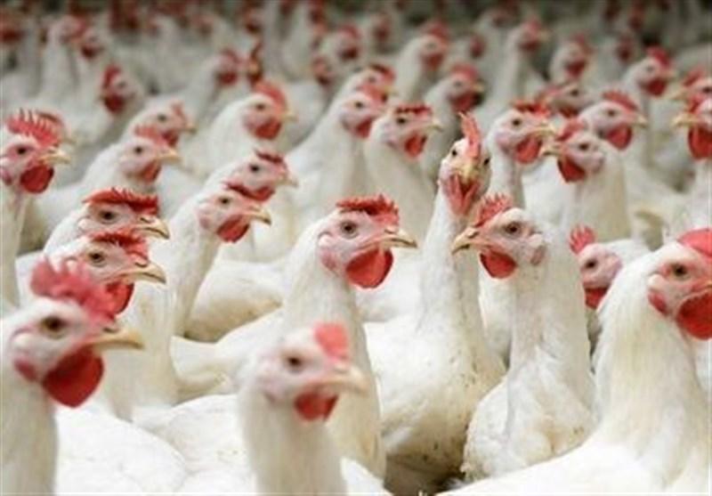 چهار واحد مرغداری طی پرونده ای به ارزش پانزده میلیارد ریال به تعزیرات حکومتی استان همدان معرفی شدند.